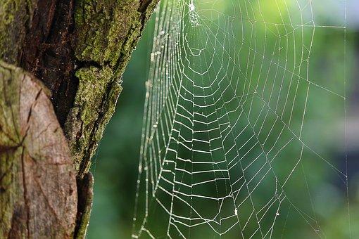 spider-webs-3529523__340